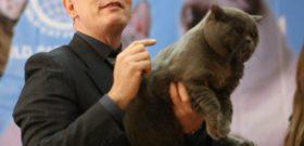Международная выставка кошек WCF «ГламМурр, Богема, РосКошь…»