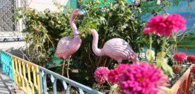 Ясли — сад «Ак-Балашка»