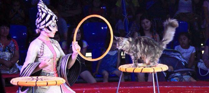 С 9 по 25 сентября Цирк «Шапито Millenium»!