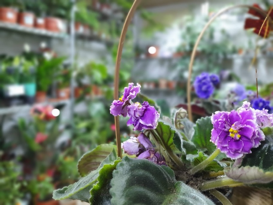магазин домашних цветов
