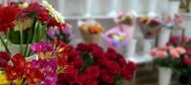 Safi flowers